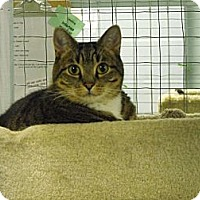 Adopt A Pet :: Indy - Mission, BC