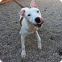 Adopt A Pet :: Buttercup - Vernon Hills, IL