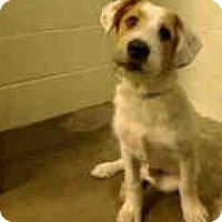 Adopt A Pet :: Clancy AWESOME PUPPY! - Antioch, IL