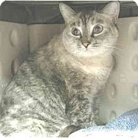 Adopt A Pet :: Anna - Mesa, AZ