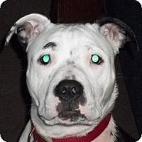 Adopt A Pet :: Kiyah CP - Dayton, OH