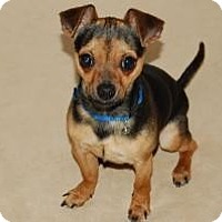 Adopt A Pet :: Eric - Shawnee Mission, KS