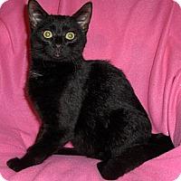 Adopt A Pet :: Carlos - Richmond, VA
