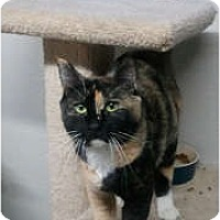 Adopt A Pet :: Sybil - Anchorage, AK