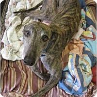 Adopt A Pet :: Angel (JNL Unseen Angel) - Chagrin Falls, OH