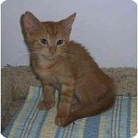 Adopt A Pet :: Duke - Odenton, MD