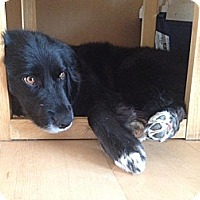 Adopt A Pet :: Salsa - Saskatoon, SK