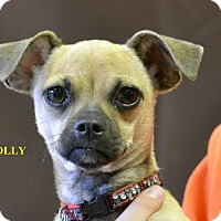 Adopt A Pet :: POLLY - Higley, AZ