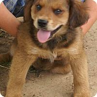 Adopt A Pet :: Tex - Plainfield, CT