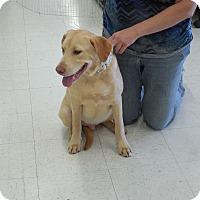 Adopt A Pet :: Murphy - Murrells Inlet, SC
