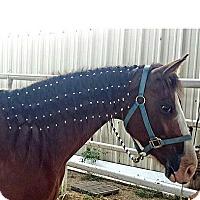 Adopt A Pet :: Iris - Farmersville, TX