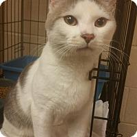 Adopt A Pet :: B-1
