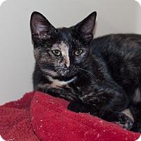 Adopt A Pet :: Tillie - New Martinsville, WV