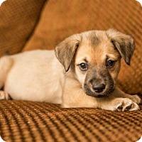 Adopt A Pet :: Hufflepuff - Houston, TX