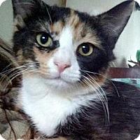 Adopt A Pet :: Fetta - Toms River, NJ
