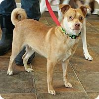 Adopt A Pet :: Quinn - Lisbon, OH