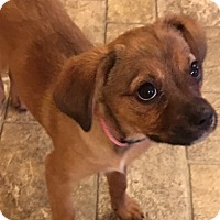 Adopt A Pet :: Tina - Hamburg, PA