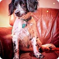 Adopt A Pet :: Sam - Alpharetta, GA