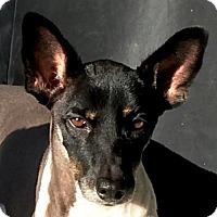 Adopt A Pet :: Lucinda - San Francisco, CA