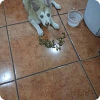 Adopt A Pet :: Tessa - Vancouver, BC
