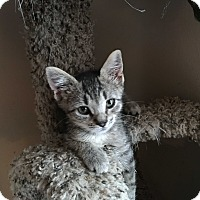 Adopt A Pet :: Gromit - Mount Laurel, NJ