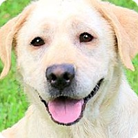 Adopt A Pet :: ABBY(LOVES HER FAMILY!!) - Wakefield, RI