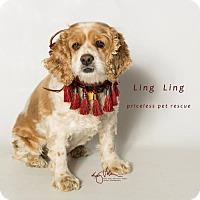 Adopt A Pet :: Ling Ling - Chino Hills - Chino Hills, CA