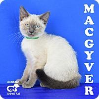 Adopt A Pet :: Macgyver - Carencro, LA