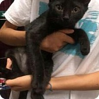 Adopt A Pet :: Yahtzee - Centerville, GA