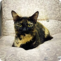 Adopt A Pet :: Mercy Moon - Casa Grande, AZ
