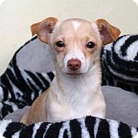 Adopt A Pet :: Roy - Los Angeles, CA