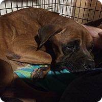 Adopt A Pet :: Mr. Tuff - Austin, TX