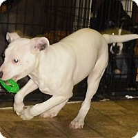 Adopt A Pet :: Dale - COVENTRY, CT