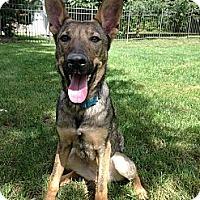Adopt A Pet :: Greta ~ Adoption Pending - Youngstown, OH