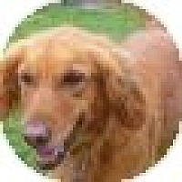 Adopt A Pet :: Molly - Denver, CO