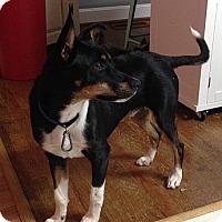 Adopt A Pet :: Sherman - Brattleboro, VT