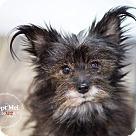 Adopt A Pet :: Kadence