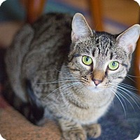 Adopt A Pet :: Crystal - Baltimore, MD