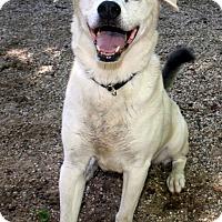 Adopt A Pet :: Saber - Fennville, MI