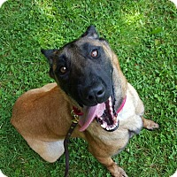 Adopt A Pet :: Helde - Wattertown, MA