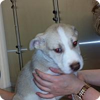 Adopt A Pet :: Jessica - Mechanicsburg, PA