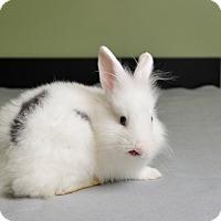 Adopt A Pet :: Delaney - Marietta, GA