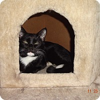 Adopt A Pet :: Andrew - Saint Albans, WV