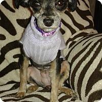 Adopt A Pet :: Nori - Las Vegas, NV