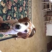 Adopt A Pet :: Lola - Stafford, VA