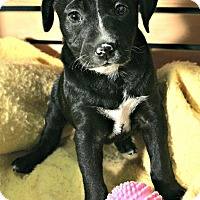 Adopt A Pet :: Avery - Lufkin, TX