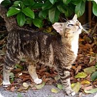 Adopt A Pet :: Benji - Orlando, FL