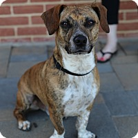 Adopt A Pet :: Luke - Manassas, VA
