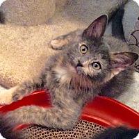 Adopt A Pet :: Velma - Colmar, PA