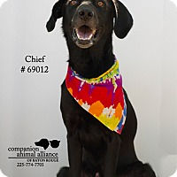 Adopt A Pet :: Chief - Baton Rouge, LA